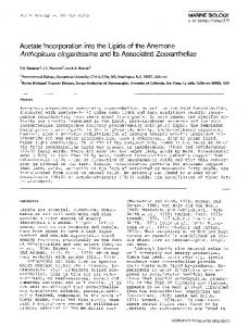 Acetate incorporation into the lipids of the anemone Anthopleura elegantissima and its associated zooxanthellae