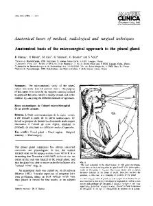 Anatomical basis of the microsurgical approach to the pineal gland