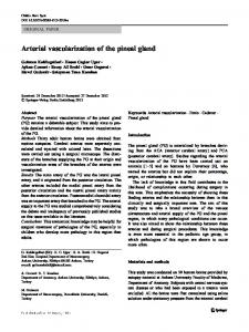 Arterial vascularization of the pineal gland