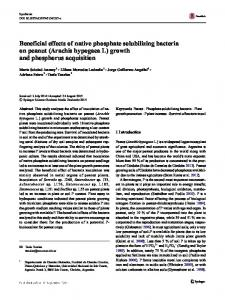 Beneficial effects of native phosphate solubilizing bacteria on peanut (Arachis hypogaea L) growth and phosphorus acquisition