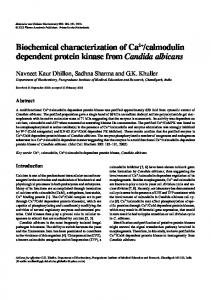 calmodulin dependent protein kinase from Candida albicans