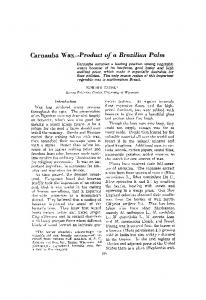 Carnauba wax—Product of a Brazilian palm