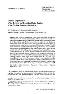 Cellular organization of the lateral and postinfundibular regions of the median eminence in the rat