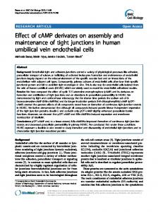 Effect of cAMP derivates on assembly and maintenance of tight junctions in human umbilical vein endothelial cells