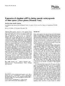 Expression of abundant mRNAs during somatic embryogenesis of white spruce [Picea glauca (Moench) Voss]