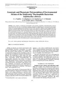 Genotypic and phenotypic polymorphism of environmental strains of the moderately thermophilic bacterium Sulfobacillus sibiricus