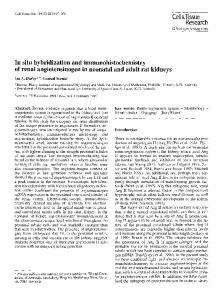 In situ hybridization and immunohistochemistry of renal angiotensinogen in neonatal and adult rat kidneys