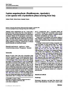 Lepiota sanguineofracta (Basidiomycota, Agaricales), a new species with a hymeniform pileus covering from Italy