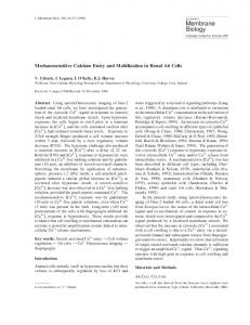 Mechanosensitive Calcium Entry and Mobilization in Renal A6 Cells