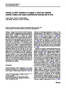 Melody, an ENU mutation in Caspase 3, alters the catalytic cysteine residue and causes sensorineural hearing loss in mice