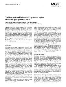 Multiple proteins bind to the P2 promoter region of the zein gene pMS1 of maize