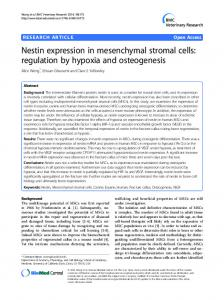 Nestin expression in mesenchymal stromal cells: regulation by hypoxia and osteogenesis