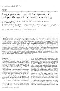 Phagocytosis and intracellular digestion of collagen, its role in turnover and remodelling