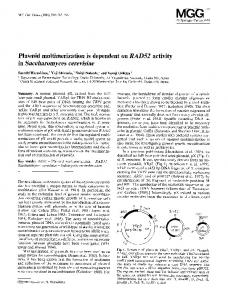 Plasmid multimerization is dependent on RAD52 activity in Saccharomyces cerevisiae
