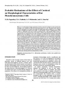 Probable Mechanisms of the Effects of Cerebral on Morphological Characteristics of Rat Pheochromocytoma Cells