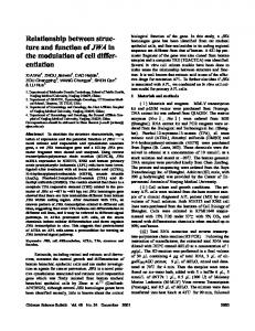 Relationship between structure and function ofJWA in the modulation of cell differentiation
