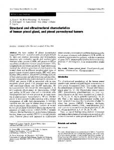Structural and ultrastructural characteristics of human pineal gland, and pineal parenchymal tumors