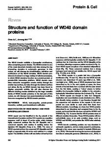 Structure and function of WD40 domain proteins