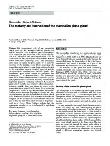 The anatomy and innervation of the mammalian pineal gland