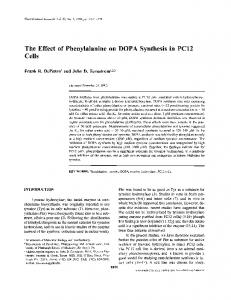 The Effect of Phenylalanine on DOPA Synthesis in PC12 Cells