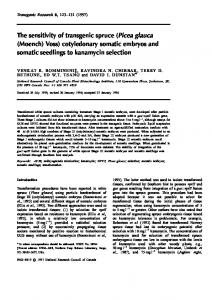 The sensitivity of transgenic spruce (Picea glauca (Moench) Voss) cotyledonary somatic embryos and somatic seedlings to kanamycin selection