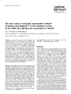 The time course of retrograde transsynaptic transport of tetanus toxin fragment C in the oculomotor system of the rabbit after injection into extraocular eye muscles