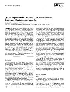 The use of plasmid DNA to probe DNA repair functions in the yeast Saccharomyces cerevisiae