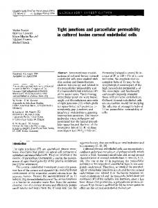 Tight junctions and paracellular permeability in cultured bovine corneal endothelial cells