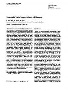 Transepithelial Taurine Transport in Caco-2 Cell Monolayers