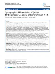 Zymographic differentiation of [NiFe]-Hydrogenases 1, 2 and 3 of Escherichia coli K-12